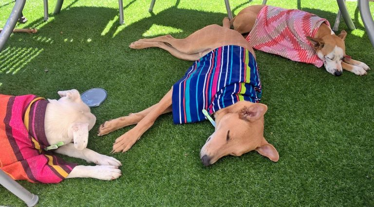 Hunde Hitze