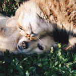 Energetische Tierheilung