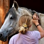 energetische Tierheilung Praxis