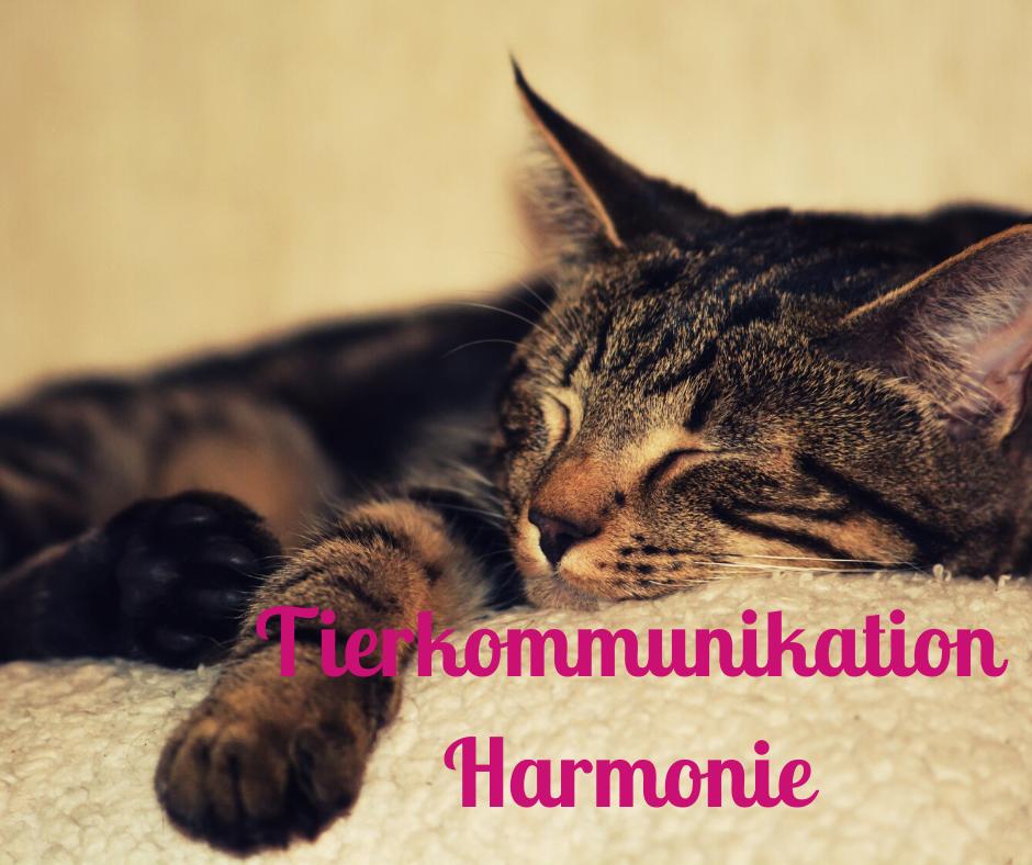 Tierkommunikation Harmonie