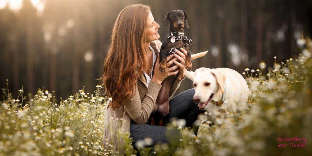 Frau Hunde Online Kurs mit Tieren sprechen lernen Tierkommunikation Selbstlernkurs