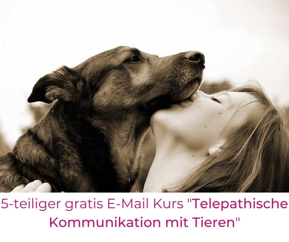 Frau Hund gratis Tierkommunikationskurs mit Tieren sprechen lernen Minikurs Schnupperkurs Emailkurs