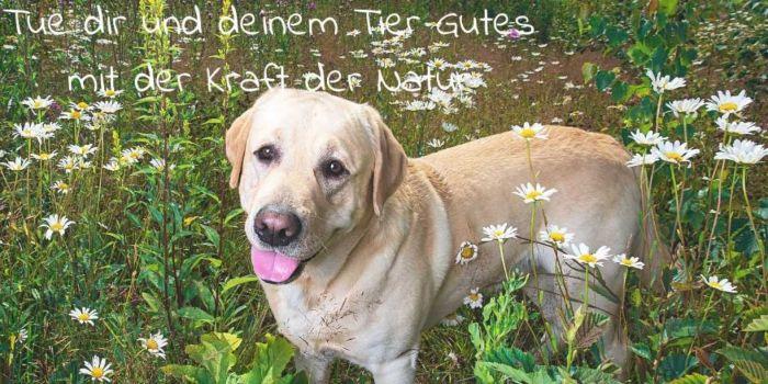 Kraeuter-Raeuchern-Knospenkurse-fuer-Tiere-und-Menschen-1024x512