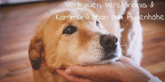 Tierkommunikation-mit-dem-eigenen-Tier-sprechen-lernen-auf-Augenhoehe-1024x512