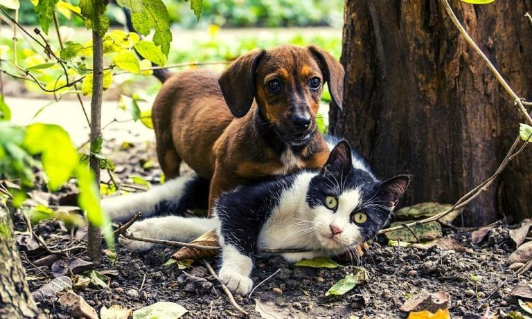 hund katze harmonisches miteinander von tieren online kurs tierkommunikation mit eigenen tieren lernen