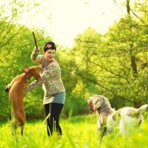 frau spielt mit hunden hunde verstehen sich beziehung unter tieren ist harmonisch online kurs mit eigenen tieren sprechen aufbaukurs tierkommunikation