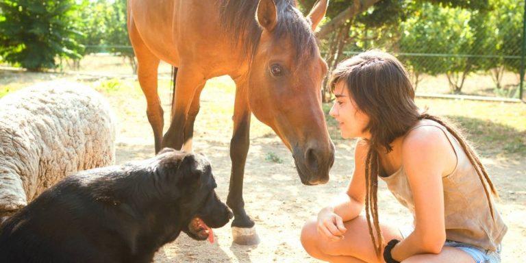 frau hund pferd mit den eigenen tieren sprechen seelenverbindung stärken spiegelgesetzt verstehen körperkommunikation seelengespräche